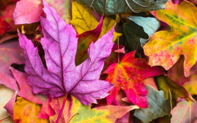 September: A Time for Contradictions